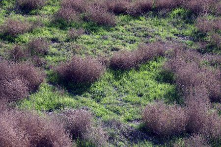 Banning Grasslands