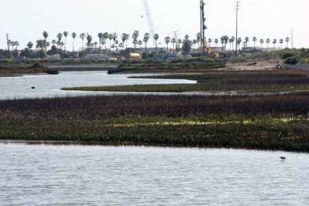 Banning Ranch Marshlands