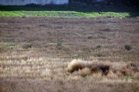 Banning Ranch Mesa Grasslands