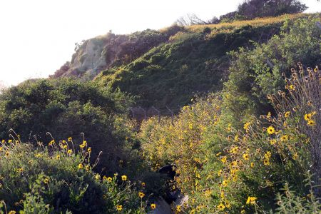 Bluffs Over Pacific Coast Highway