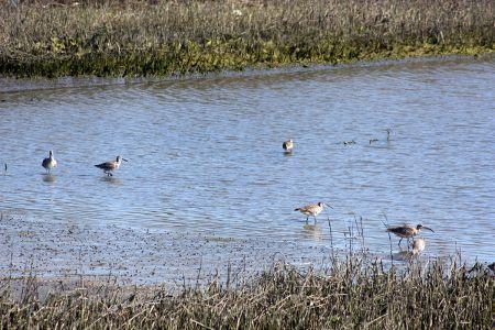 Marshland Water Fowl