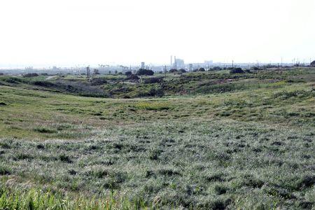 Mesa Grasslands