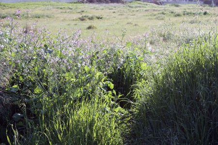 Mesa South Grasslands