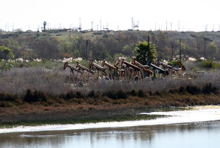 Oil Jacks On The Slough