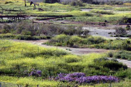 South Mesa Grasslands