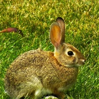 brc-gallery-slider-img-bunny-rabbit-630x400