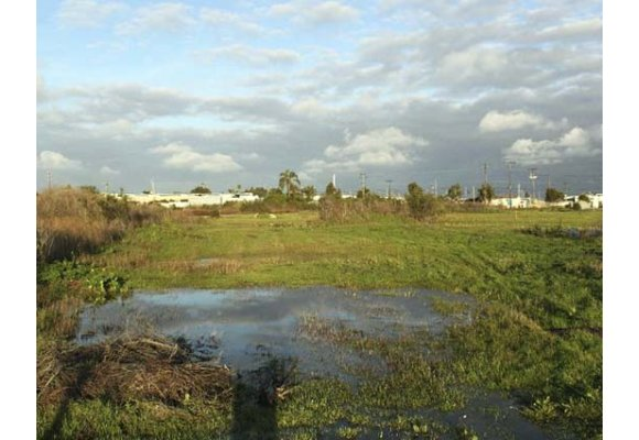 Report:  City needs to protect Fairview Park Vernal Pools