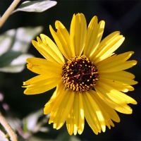 brc-gallery-slider-img-sunflower