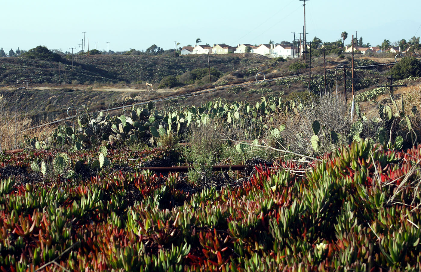 Stop 3 Cactus